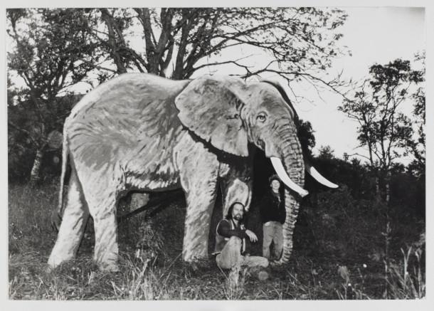 ville dyr på vege - elefant